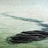 未確認生物 UMAの謎と真実に迫る!超巨大シーサーペントとは