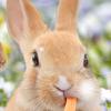 ウサギは自分のウンコを食べるのが普通なんだって!?何でそうなるのか?